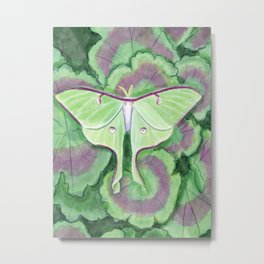 Luna Moth on Geranium Leaves Metal Print