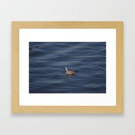 Seagull at the ocean Framed Art Print