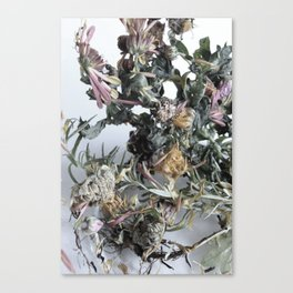 Floating Roots Colour Ed. 2 Canvas Print