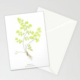 Maidenhair Fern Stationery Cards