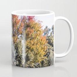 Fall, Autumn, Trees, Leaves, Sunny, Coffee Mug