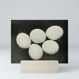 Vintage Photograph, Eggs Mini Art Print