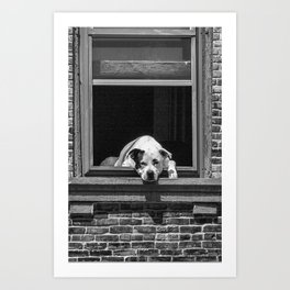Window Watchdog Art Print