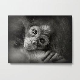 Spider monkey Metal Print