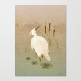 White Heron in Bulrushes Canvas Print