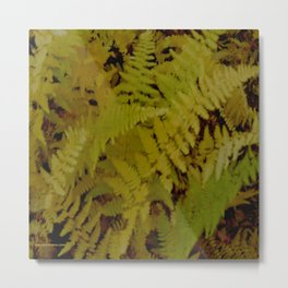 Vermont Ferns in Autumn Foliage Metal Print