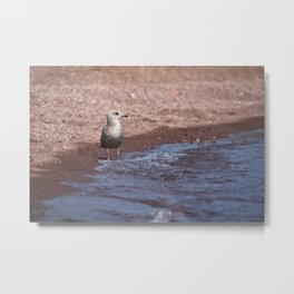 Gull in the Waves Metal Print