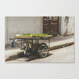 Limes on the Street, Cartagena, Colombia Canvas Print