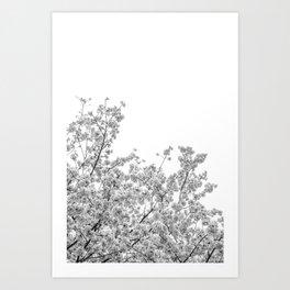 Cherry Blossoms (Black and White) Art Print