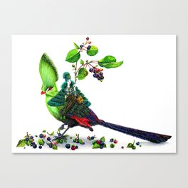Turaco Canvas Print