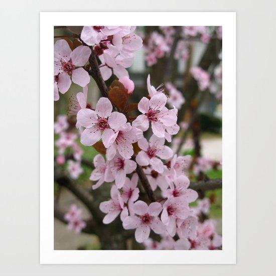 Cherry Plum Blossoms Art Print