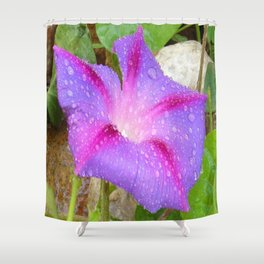 Mauve and Magenta Morning Glory with Water Drops Shower Curtain