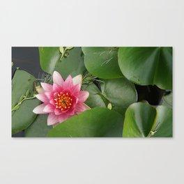 Lotus Flowe_pink1 Canvas Print