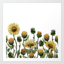 Hand drawn watercolor vector calendula Art Print