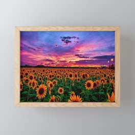 Sunflower fields with beautiful sunset - Jeanpaul Ferro Framed Mini Art Print