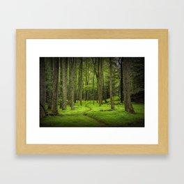 A Woodland Path in Cades Cove Framed Art Print