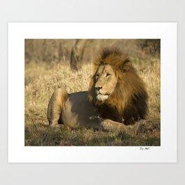 CW-002 Male Lion Art Print