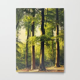 Forest in Evening Light Metal Print