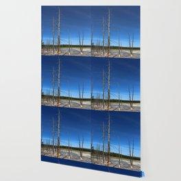 Lodgepole Pines In Geyser Basin Wallpaper