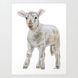 Quizzical lamb Art Print