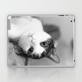 Upside down cat Laptop & iPad Skin