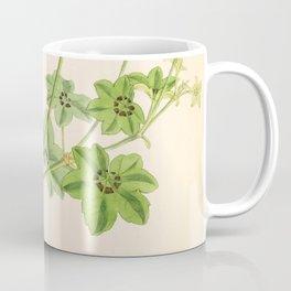 Ivy Leaved Pelargonium Coffee Mug