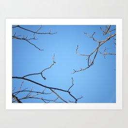 3 Branches Art Print