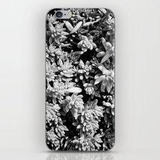 Succulent circle iPhone & iPod Skin