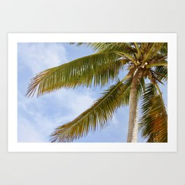 Palm Tree in Cuba Art Print
