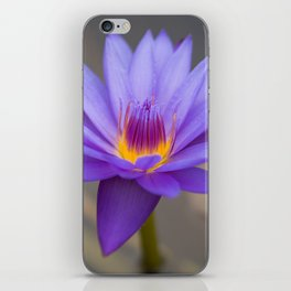 Purple Water Lily iPhone Skin