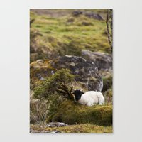 lamb Canvas Prints featuring Lamb by Aaron MacDougall