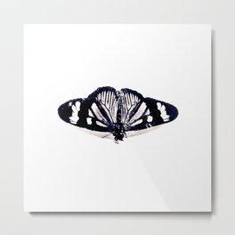 Buterfly Metal Print