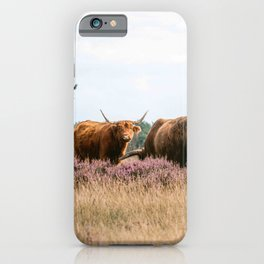 Two grazing Wild Scottish Highlander cows in national park | Cattle in Nature | Veluwe park, the Netherlands | Travel photography iPhone Case