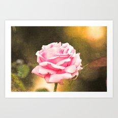 Pink rose  Art Print