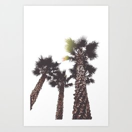 Vintage California Palms Art Print