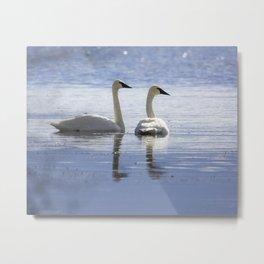Trumpeter Swans Metal Print