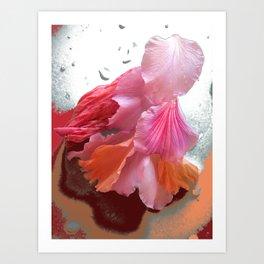 Flower Petals Art Print