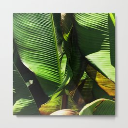 Palm Leaves in Sunlight and Shadow Close-up Photo Metal Print