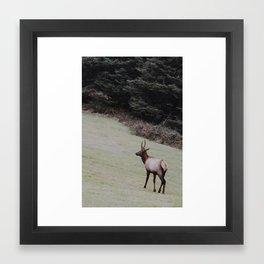 Elk on the Road Framed Art Print