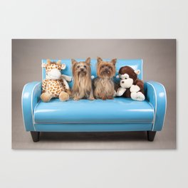 Dogs on retro blue couch Canvas Print