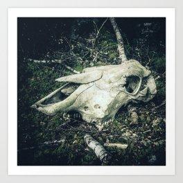 Skull in the woods Art Print