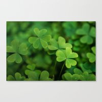 clover Canvas Prints featuring Clover by Michelle McConnell