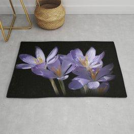 lilac crocusses on black Rug