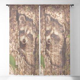 Raccoon in Tree Hollow Woodburn Sheer Curtain