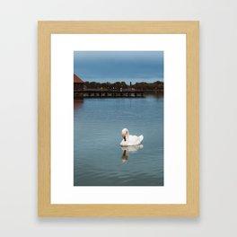 Swan swimming at Lake Palic, Serbia / Blue / Dawn Framed Art Print