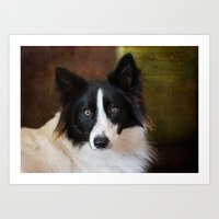 border collie Art Prints featuring Border Collie by lifeandthat photography