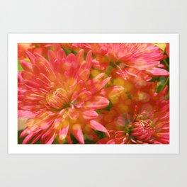 Glowing Chrysanthemums Art Print