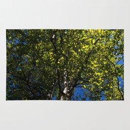 Birch Sunburst Rug
