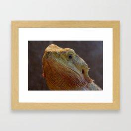 Bearded Dragon 1 Framed Art Print