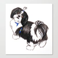 shih tzu Canvas Prints featuring Shih Tzu by HannahClarkArt